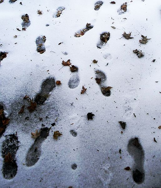 snowfootprints